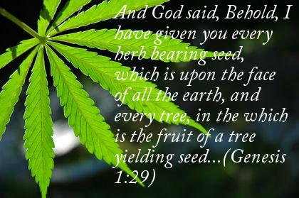 cannabispic5