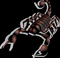 scorpion-23158_960_720
